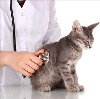 Ветеринарные клиники в Белой Холунице